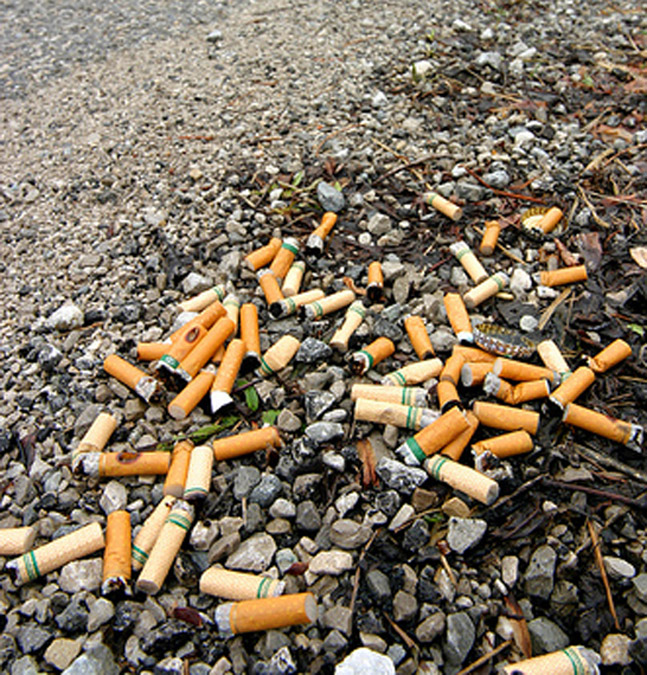 Cigarette butts on a road